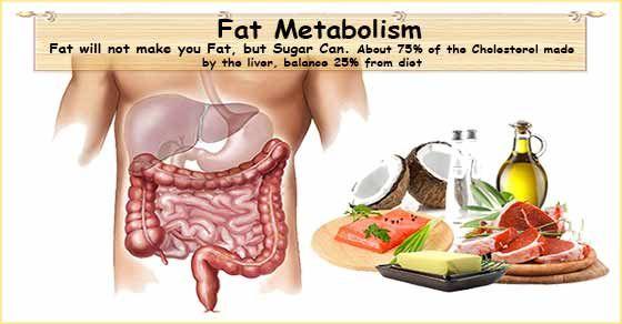 Jacob wilson fat loss diet