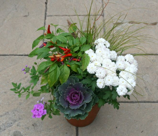 17 best ideas about fall potted plants on pinterest whiskey barrel planter container flowers - Potted autumn flowers ...