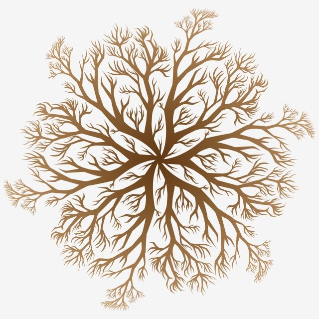 Vector Drawing Of An Oak Tree Root In Vector Form Tree Clipart Environment Roots Tree Png And Vector With Transparent Background For Free Download Mandala Background Vector Drawing Christmas Tree Background