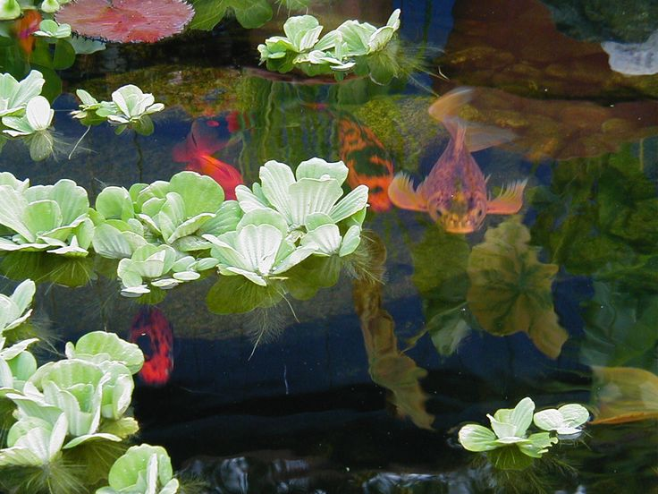 131 Best Images About Water Gardens Koi Ponds On Pinterest Container Water Gardens Pump And