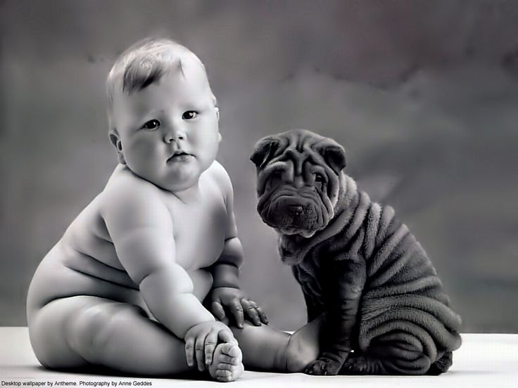 Wrinkles wallpaper from funny pictures this is a funny pic of a chubby wrinkled baby and a chubby wrinkled puppy sweet cute and funny