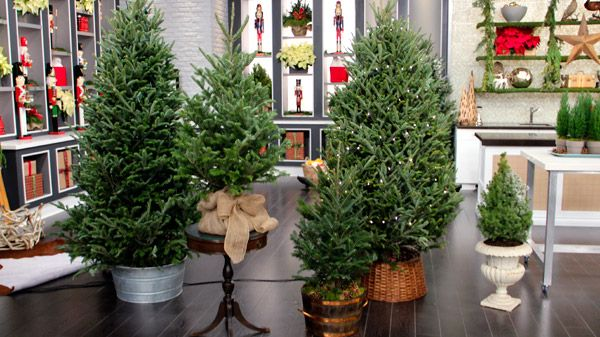 Different ways to display Christmas trees for an added touch of style