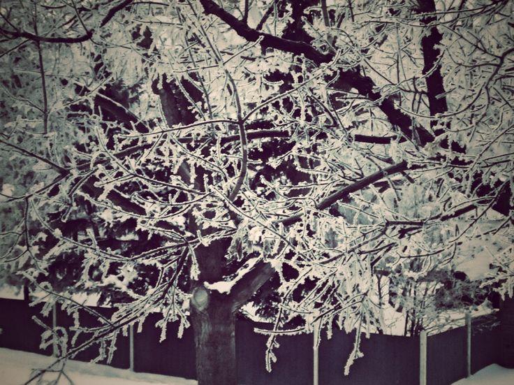 beautiful snowy weather