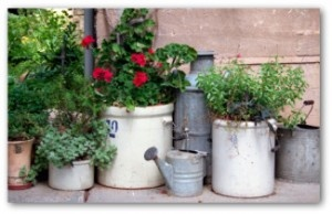 old enamel and metal containers repurposed into a plant displayPlants Can, Container Gardens, Gardens Can, Country Gardens, Gardens Design, Old Crocks, Front Porches, Container Gardening, Yards