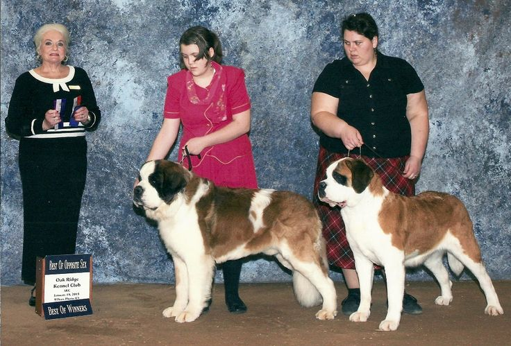 We Did great at the Harriman, TN Dog Show in January and we just got our Show shot and we are over the moon to have it! The Memories we made with our friends and with our family- Kids and Dogs was great!