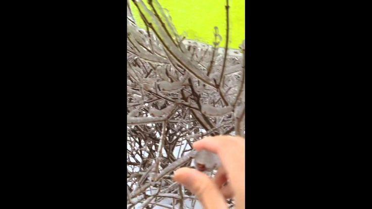 Dangerous Ice storm - wicked winter weather in Toronto! Frozen
