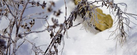 Karla kaplı çimenlerimiz üzerinde yürüyebilir miyim? - Çim, Kar, Kış