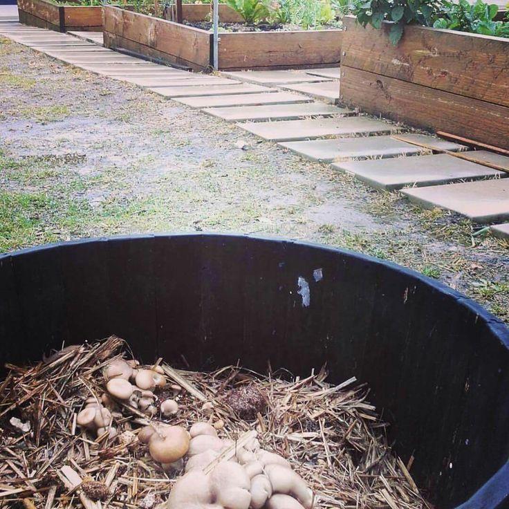 #gardening pretty cool living mulch