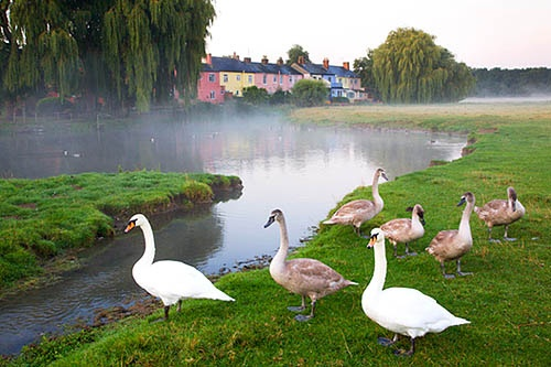 Water Meadows Sudbury Suffolk England by Mark Sunderland, via Flickr