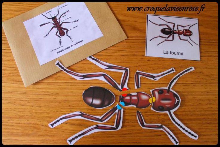 Zoologie : puzzles plastifiés » croquelavieenrose.fr - La petite vie en rose d'Anouk, Maïa et Azia.