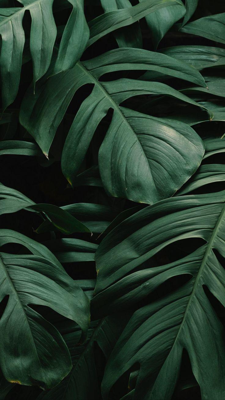 Download wallpaper 800×1420 leaves, plant, green, dark, vegetation iphone se/5s/…