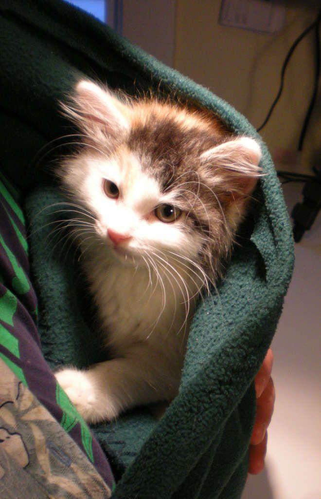 How to Make a Kitten Sling Cat having kittens, Dog sling