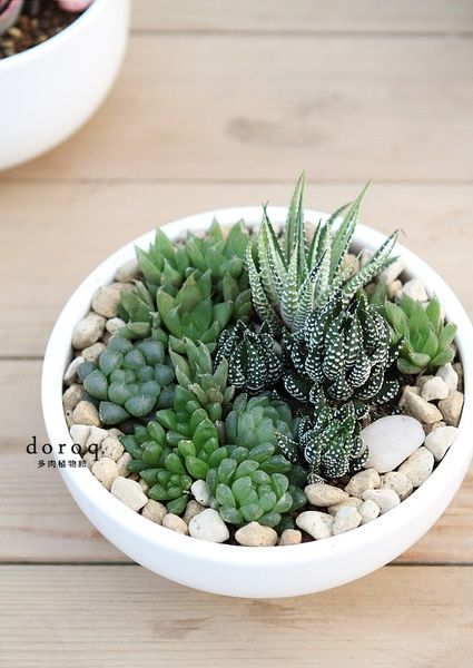 Succulents in a shallow bowl with white pebbles - use a white cereal bowl