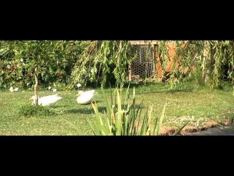 The Dandelion Hideaway - Glamping (HD)