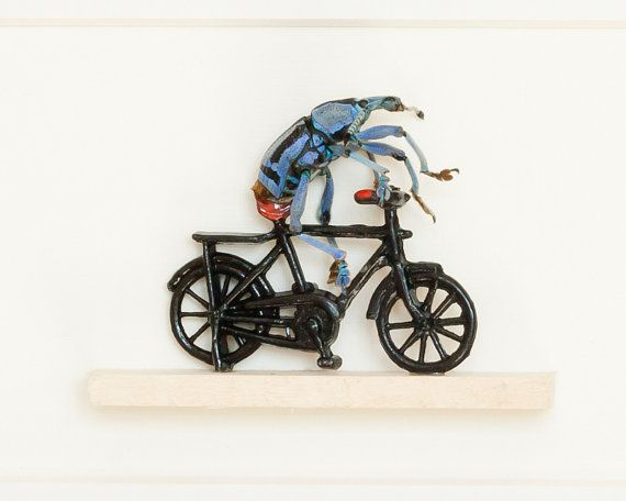 This is so wonderful! Real Beetle Riding a Bike Taxidermy Display by BugUnderGlass, $85.00