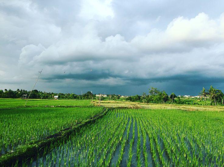 Rice Field, Gianyar, Bali #Bali #indonesia