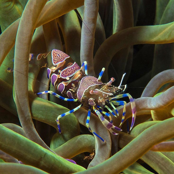 This colorful little champ is just one of the many gorgeous sea creatures you can see when you dive in any of the world-famous #diving sites of Turkey!⠀
