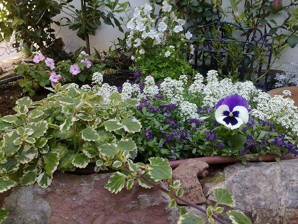 Guia de jardin. Blog de jardinería y plantas. Jardín en casa.: Galería