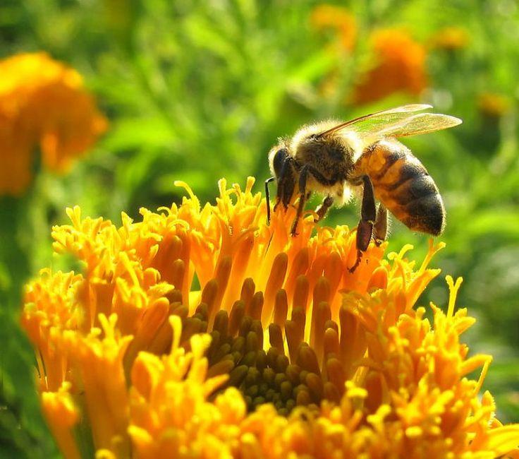 Qué pasará con la economía si desaparecen las abejas - Yahoo Finanzas