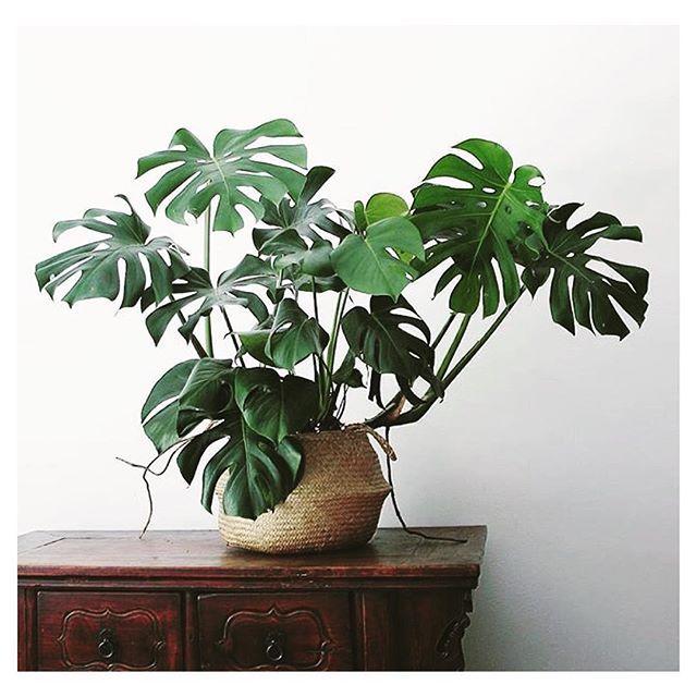 Plant obsessing via @apartmentf15…
