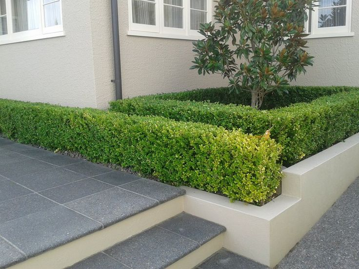 Hedge trimmed