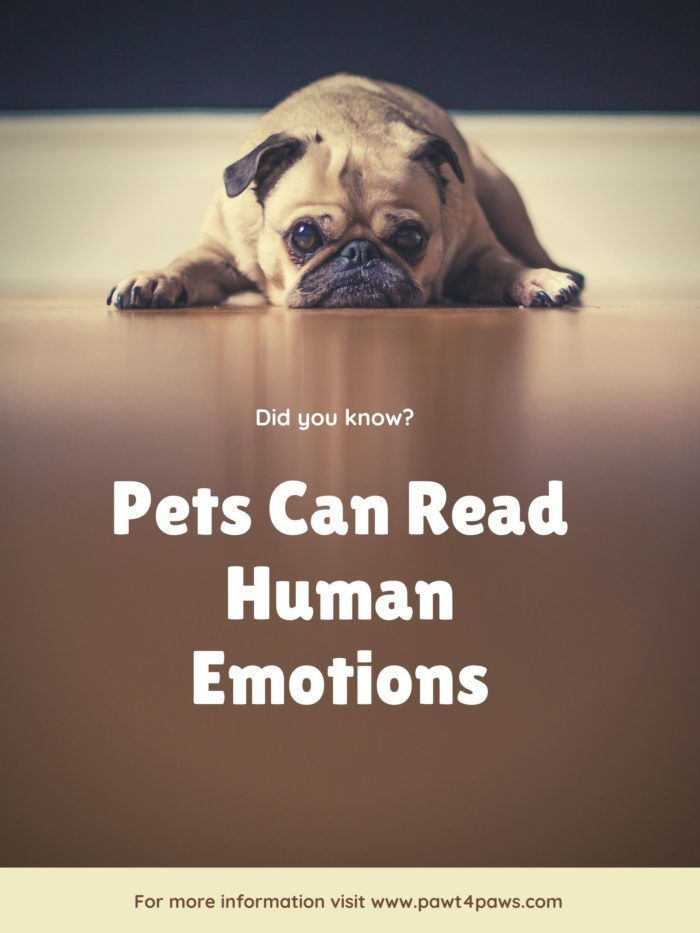A Picture A Dog Helping A Human Read