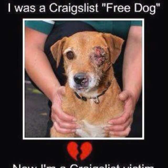 How To Put A Dog Up For Adoption On Craigslist