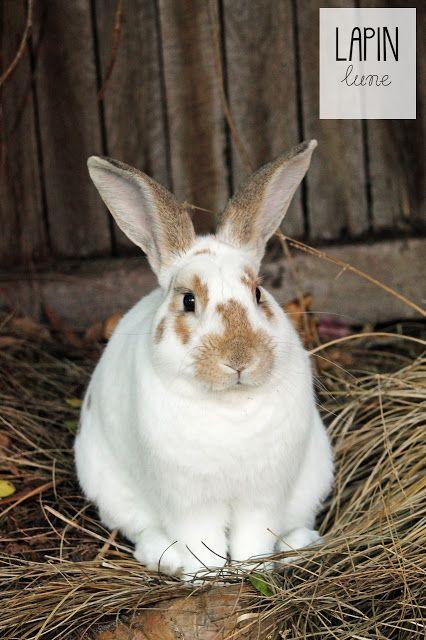 Les Jours Ordinaires - Happy Birthday to Jojo the rabbit.