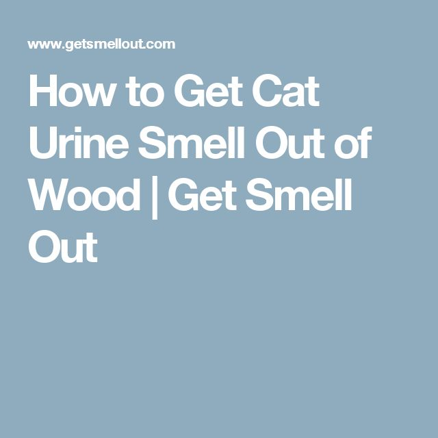 How to Get Cat Urine Smell Out of Wood | Get Smell Out