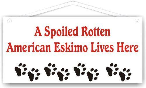 A Spoiled Rotten American Eskimo Lives Here