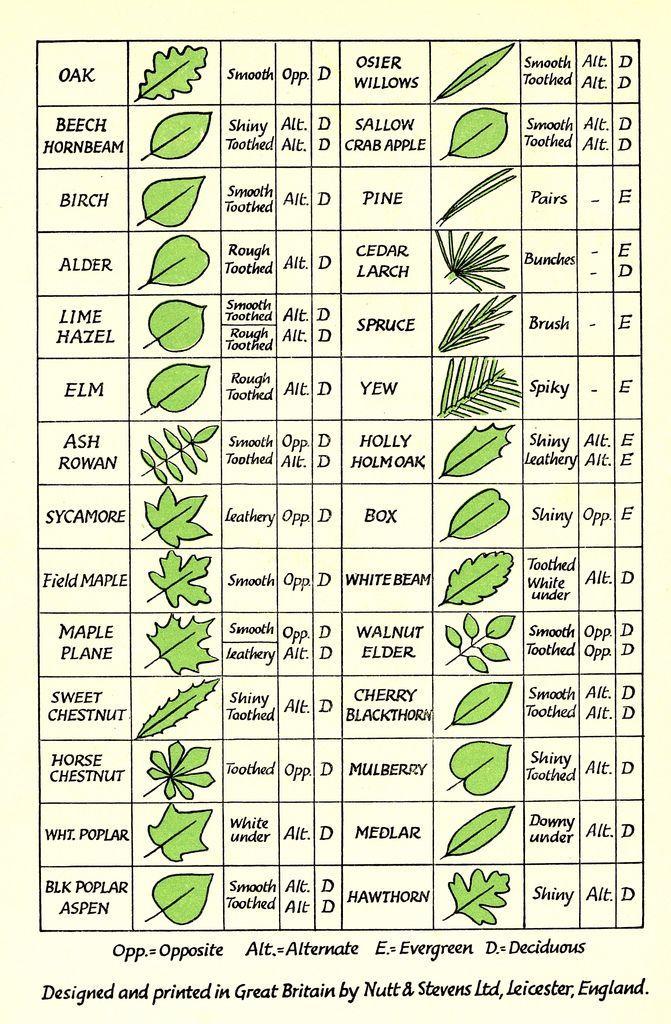 Leaf Identification – em: flickr.com