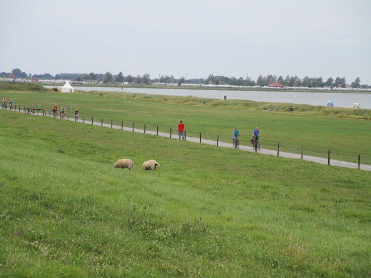 Immer am Deich entlang! Mit dem Fahrrad unterwegs in Hooksiel!