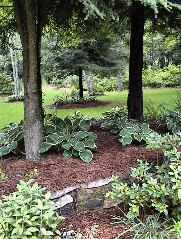 11 best images about pine straw mulch on pinterest for Plants around trees landscaping