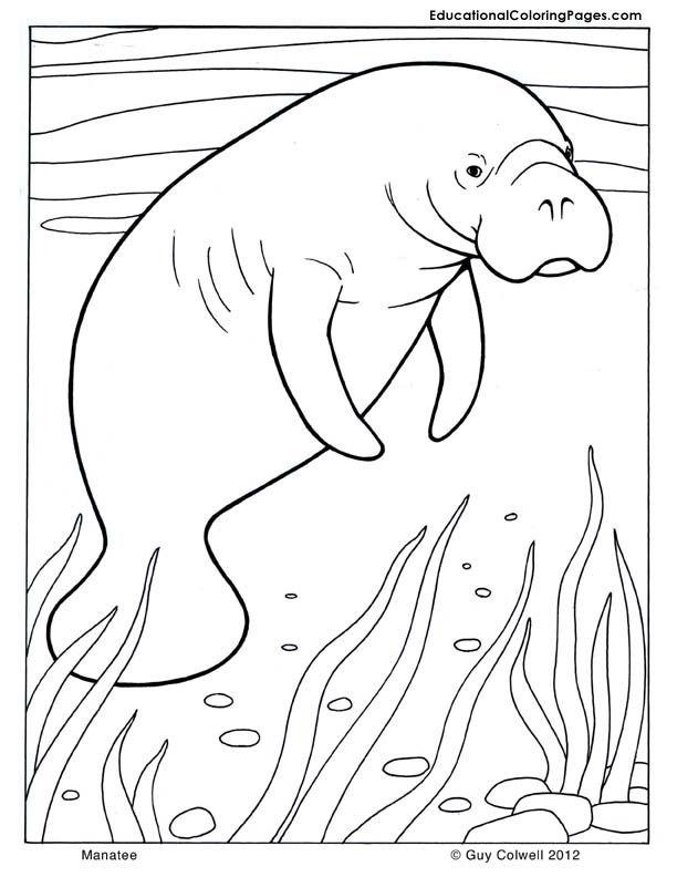 Manatee coloring mammals coloring