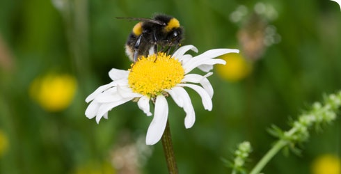 honey bee and flower symbiotic relationship examples