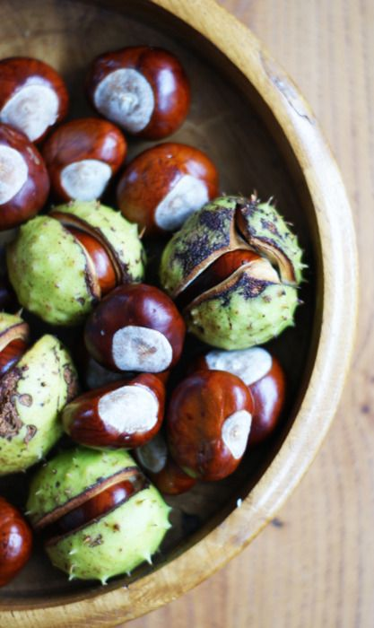 conkers, we lived on an avenue of huge chestnut trees. Constant supply of conkers.: