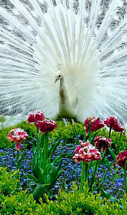 #Flowers# #Animals#