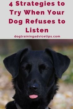4 Strategies to Try When Your Dog Refuses to Listen | Dog Training Tips | Dog Obedience Training | Dog Training Ideas | http://www.dogtrainingadvicetips.com/4-strategies-try-dog-refuses-listen #DogsTraining