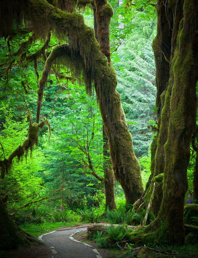 Hoh Rainforest, Olympic Peninsula in western Washington state
