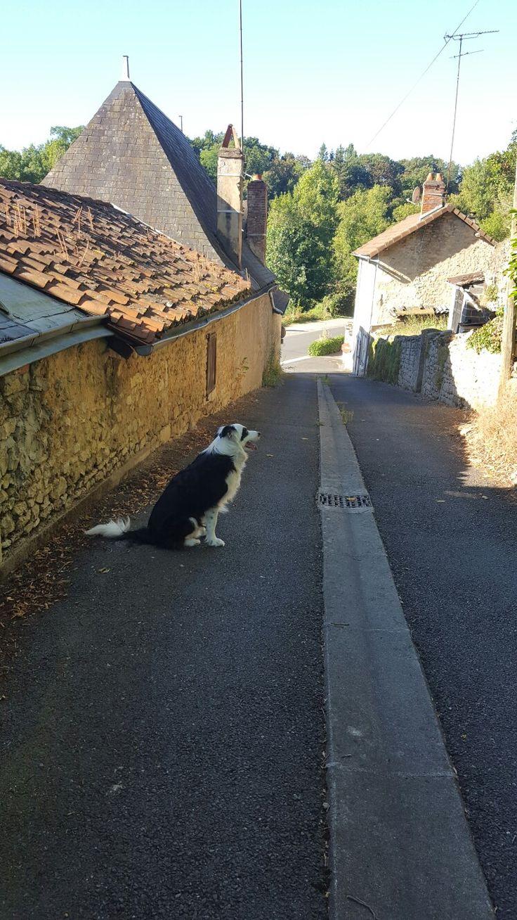 Panda waiting for me