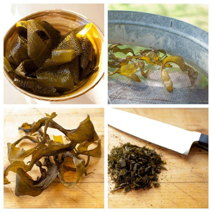 Learn how to harvest vegetables from the sea and make your own kelp flakes in this weeks blog.
