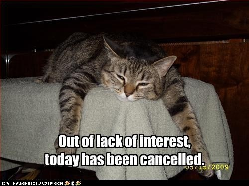 in search of an fml day.Laugh, Lazy Day, Funny Cat, Lazy Cat, Funny Stuff, Cancel, Kitty, Animal, Classic Lolcats