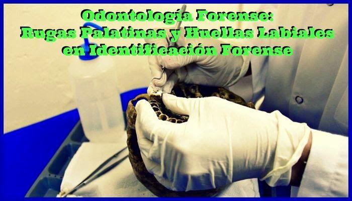 Odontología Forense: Rugas Palatinas y Huellas Labiales en Identificación Forense | Ovi Dental