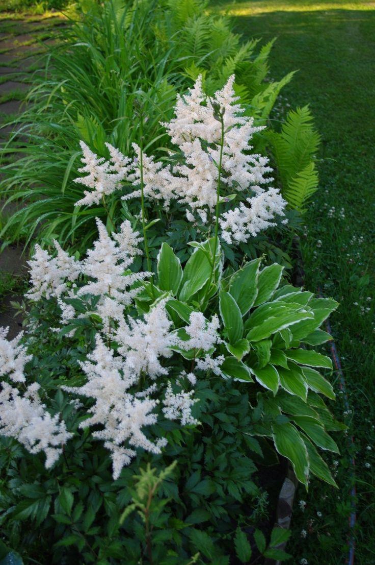 Grönt och vitt igen. Astilbe, Funkia, Ormbunke och troligen Daglilja/Irisblad.