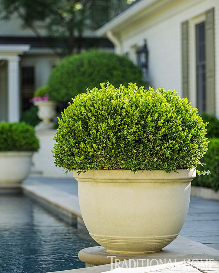 Pretty, Polished Garden in Illinois | Traditional Home ... boxwoods on corners of pool