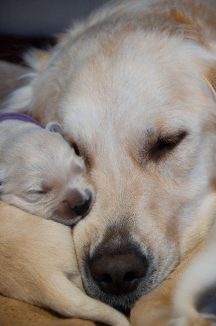 snuggles Check more at http://hrenoten.com