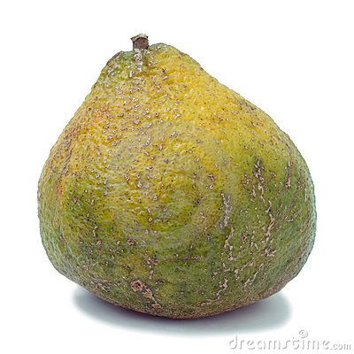Ugli Fruit Also Called Uniq Fruit - Download From Over 56 Million High Quality Stock Photos, Images, Vectors. Sign up for FREE today. Image: 80045