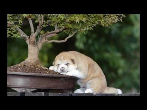 Собака-друг человека