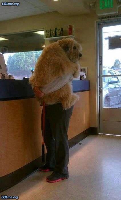 Steven doesn't like going to the vet. He's just a big old softy at heart.