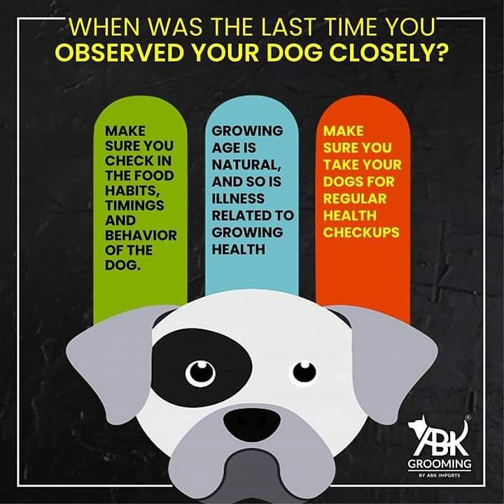 Dog Care Instructions That Every Pet Parent Needs To Follow In 2020 Pet Grooming Pet Groomers Dog Care